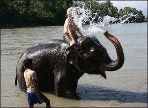 Elefantdusj